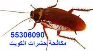 شركة مكافحة الصراصير بالكويت